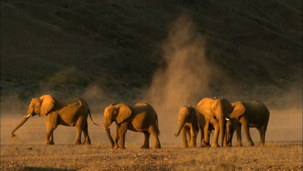 woestijnolifant namibie