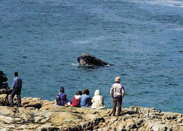 walvissen hermanus zuid-afrika