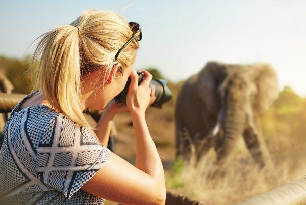 olifant fotograferen