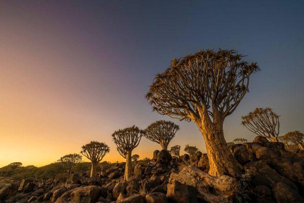 kokerboomwoud namibie