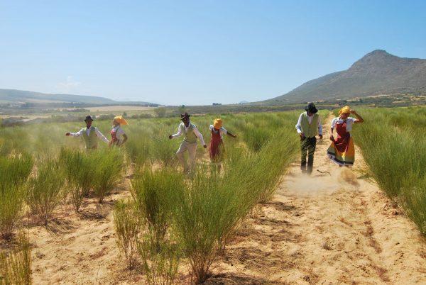 rooibos plantage