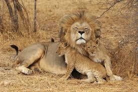 leeuw tanzania