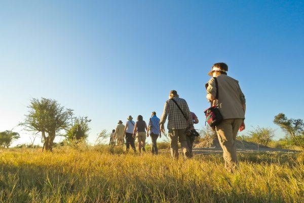 Bushwalk Okavango Delta