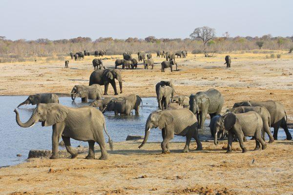 hwange olifanten