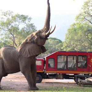 Zambia Lower Zambezi NP olifant