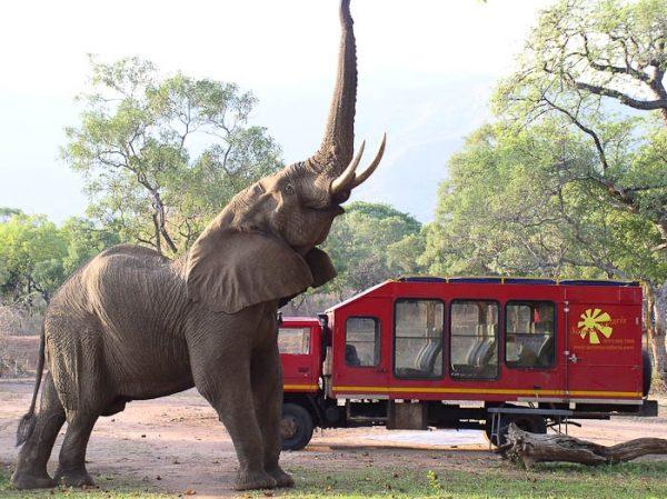 olifant Zambezi NP
