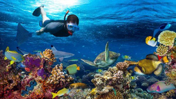 Snorkelen Zanzibar